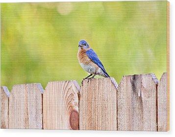 Mr. Bluebird Wood Print by Scott Pellegrin