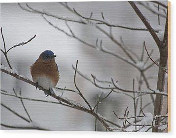 Mr Bluebird Wood Print by Teresa Mucha