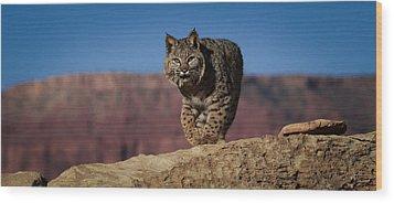 Mr. Bob Cat Wood Print by Diane Bohna