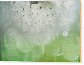 Mr. Dandelion. Inner Light Wood Print by Jenny Rainbow