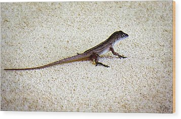 Wood Print featuring the photograph Mr. Gecko by Pennie  McCracken