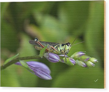 Mr. Grasshopper Wood Print