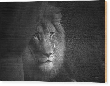 Mr Lion In Black And White Wood Print by Thomas Woolworth