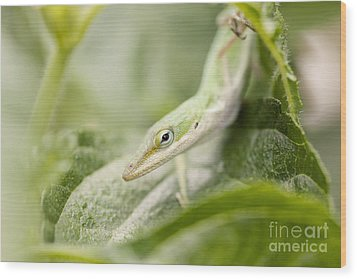 Mr Lizard Wood Print by Erin Johnson