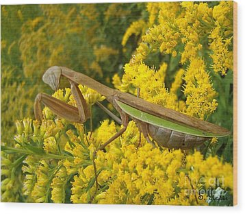 Wood Print featuring the photograph Mr. Mantis by Sara  Raber