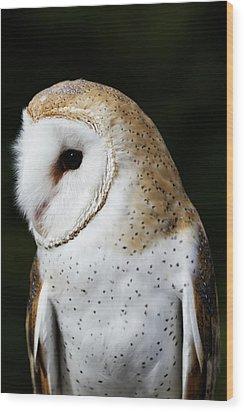 Mr Owl  Wood Print