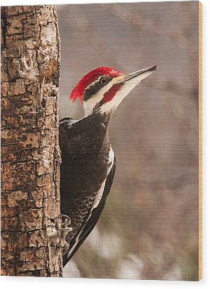 Mr. Pileated Wood Print by Lara Ellis