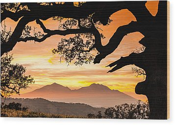 Mt Diablo Framed By An Oak Tree Wood Print