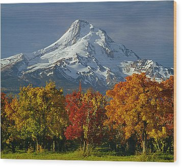 1m5117-mt. Hood In Autumn Wood Print
