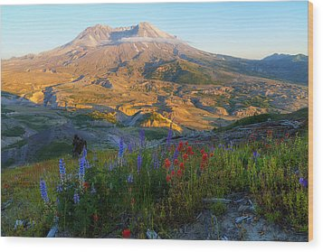 Mt. St. Helens Golden Hour Wood Print by Ryan Manuel