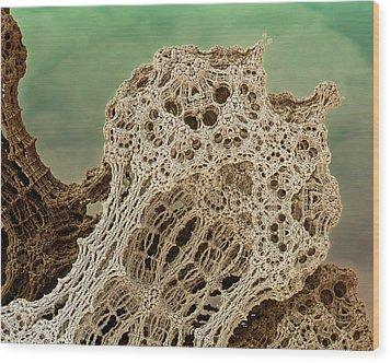 Mud Hive Wood Print by Kevin Trow
