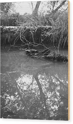 Wood Print featuring the photograph Muddy Creek by Adria Trail