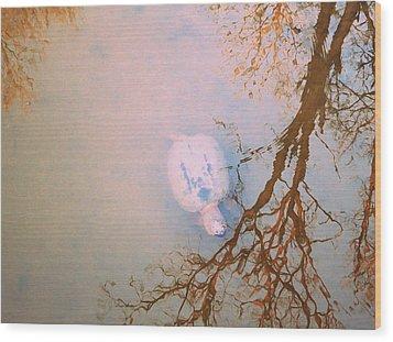 Muddy Spring Turtle Wood Print by Patricia Januszkiewicz