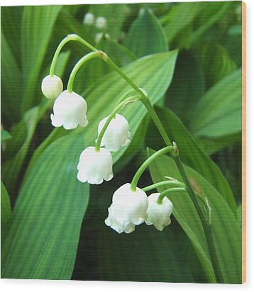 Muguet Wood Print by Marc Philippe Joly