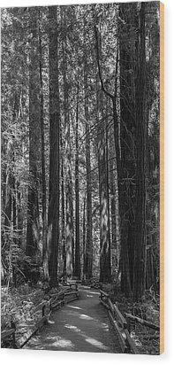 Muir Woods Giants Wood Print