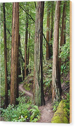 Muir Woods Wood Print by Niels Nielsen