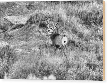 Wood Print featuring the photograph Mule Buck B/w by Kevin Bone