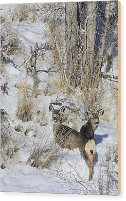 Mule Deer In The Canyon Wood Print