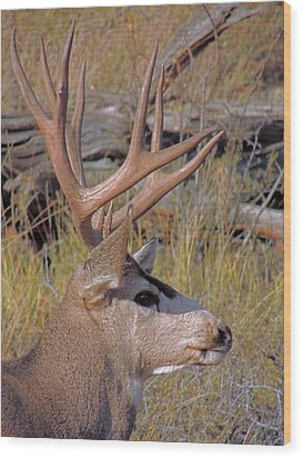 Wood Print featuring the photograph Mule Deer by Lynn Sprowl