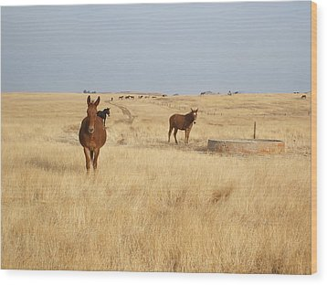 Mules In Gold Grass Wood Print