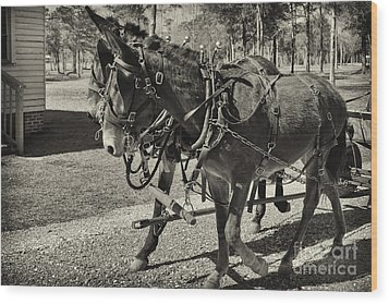 Mules In Harness Wood Print by Russell Christie