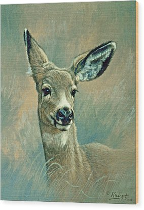 Muley Fawn At Six Months Wood Print by Paul Krapf