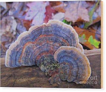 Multicolor Mushroom Wood Print