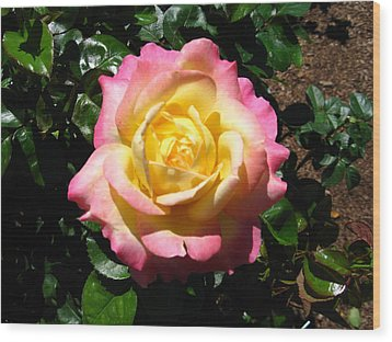 Multicolor Rose Wood Print by Bill Woodstock