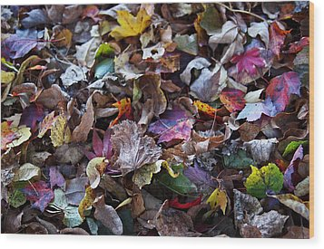 Multicolored Autumn Leaves Wood Print by Rona Black