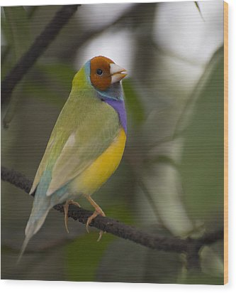 Multicolored Beauty Wood Print by Penny Lisowski
