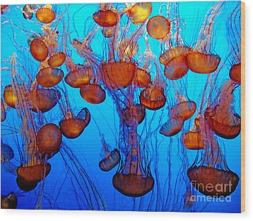 Multiple Jellyfish  Wood Print by Jim Fitzpatrick