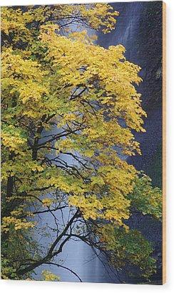 Multnomah Falls Maple Wood Print by Ken Dietz