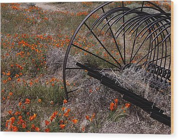 Wood Print featuring the photograph Munz Poppy by Ivete Basso Photography