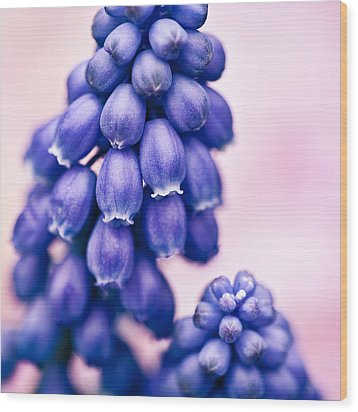 Muscari Wood Print by Dave Bowman