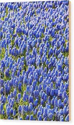 Muscari Early Magic Wood Print by Jasna Buncic