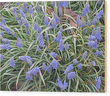 Wood Print featuring the photograph Muscari Flowers 2 by Margaret Newcomb