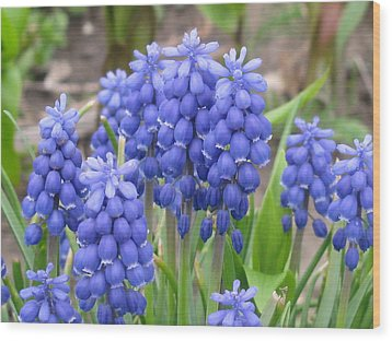 Wood Print featuring the photograph Muscari Up Close by Margaret Newcomb