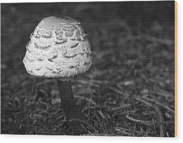 Mushroom Wood Print by Adam Romanowicz