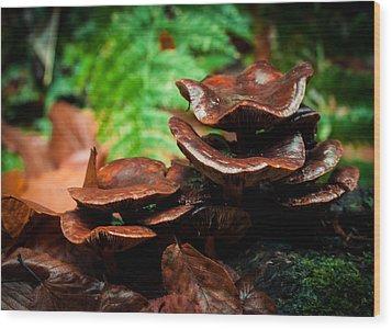 Mushroom Family Portrait Wood Print by Haren Images- Kriss Haren