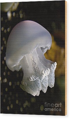 Mushroom Head Jelly Wood Print
