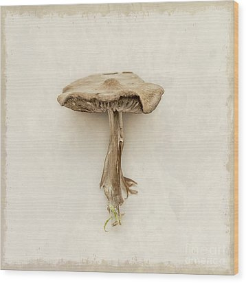 Mushroom Wood Print by Lucid Mood