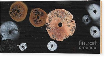 Mushroom Spore Prints Wood Print by Timothy Myles
