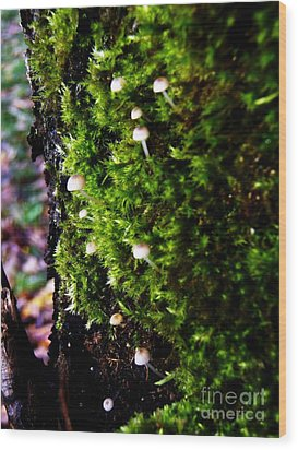 Wood Print featuring the photograph Mushrooms by Vanessa Palomino