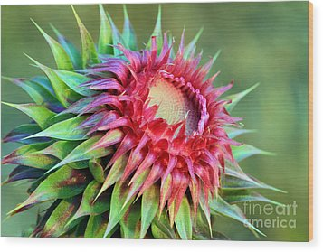 Wood Print featuring the photograph Musk Thistle by Teresa Zieba