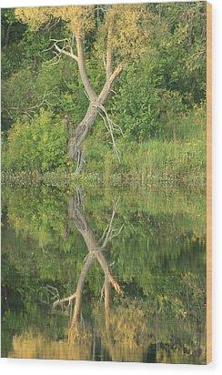 Wood Print featuring the photograph Muskoka Trees by Paula Brown