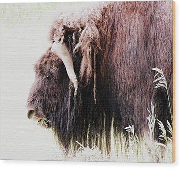 Muskox Wood Print by Ramona Johnston