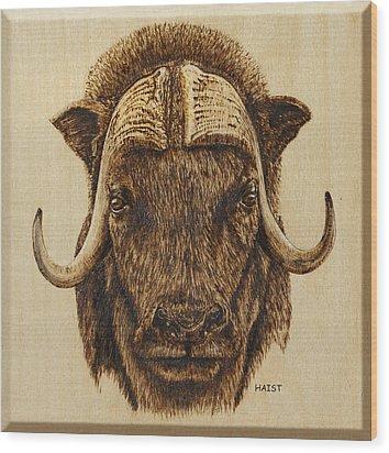 Muskox Wood Print by Ron Haist