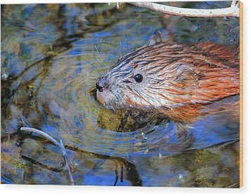 Wood Print featuring the photograph Muskrat by Larry Trupp