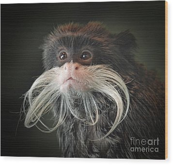 Mustached Monkey Emperor Tamarin IIi  Wood Print by Jim Fitzpatrick