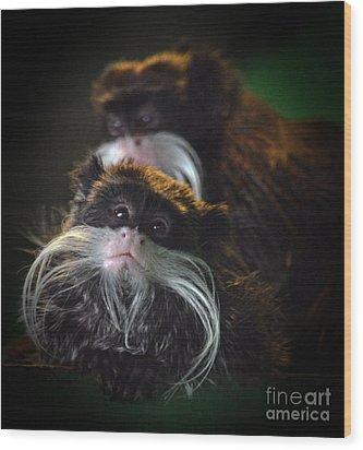 Mustached Monkeys Emperor Tamarins  Wood Print by Jim Fitzpatrick
